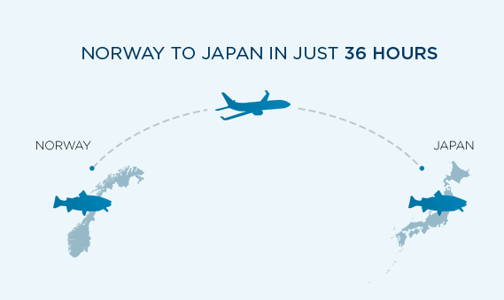 Illustration of an aeroplane transporting salmon from Norway to Japan