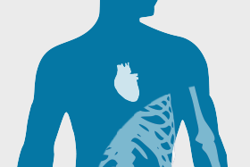 illustration of human torso with focus on heart