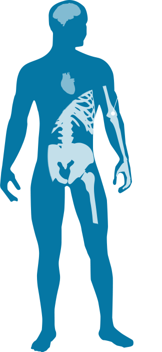 illustration of human body with focus on skeleton